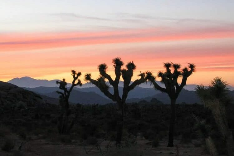 best hikes in joshua tree