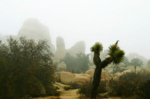 foggy landscape joshua tree california