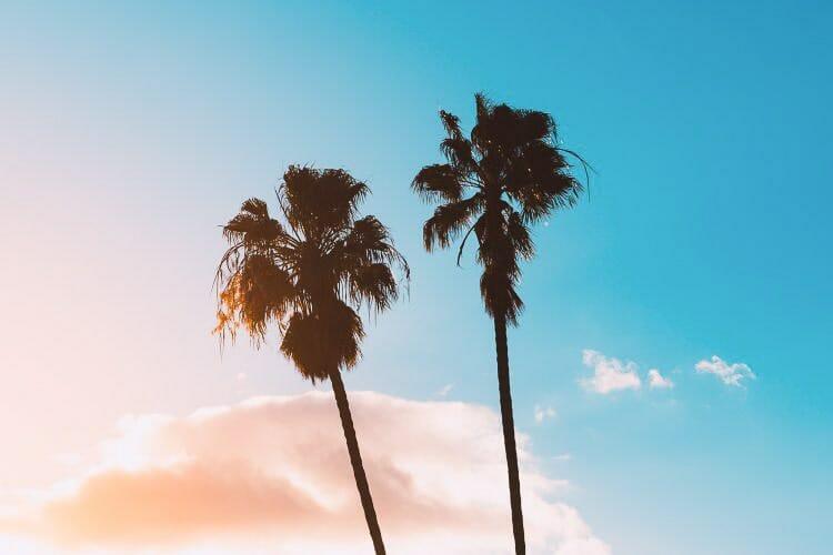 palm trees los angeles california