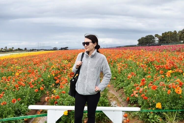 flower fields of carlsbad ranch